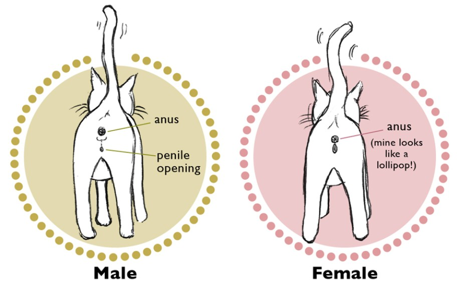 How To Tell If A Lovebire Is Male Or Female 14